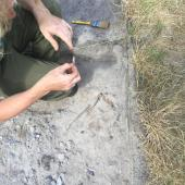 mesolithic finds